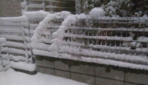 東京の貴重な雪遊び