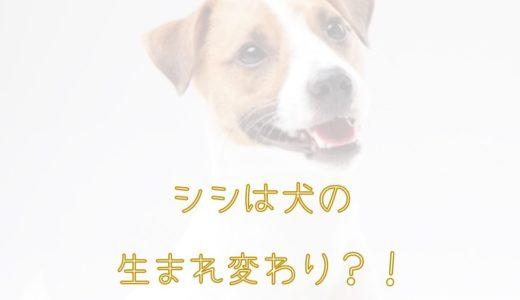 シシはジョン(犬)の生まれ変わり説。