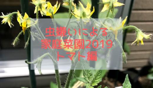 2019年家庭菜園の結果発表!の前に①トマト
